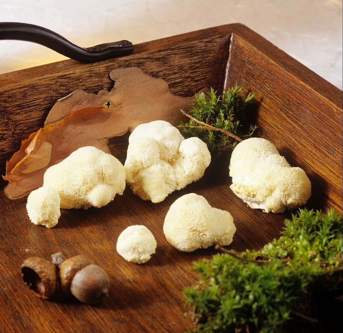 Lion's mane mushrooms on wooden tray