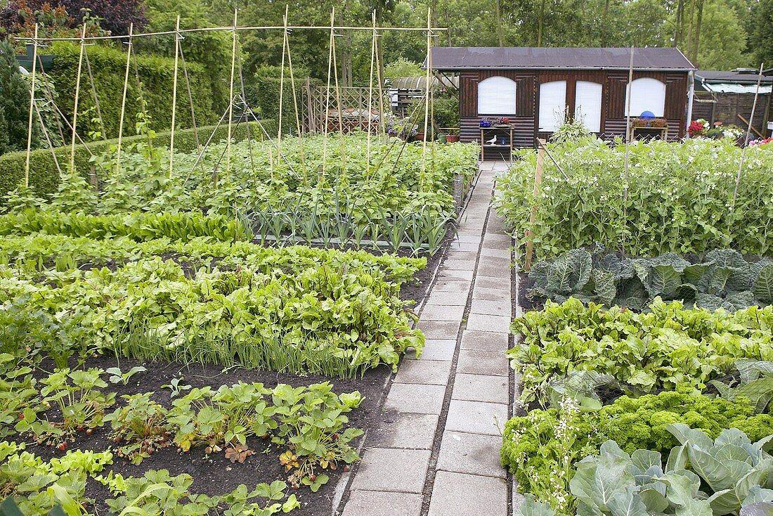 Vegetable garden with wooden summer house