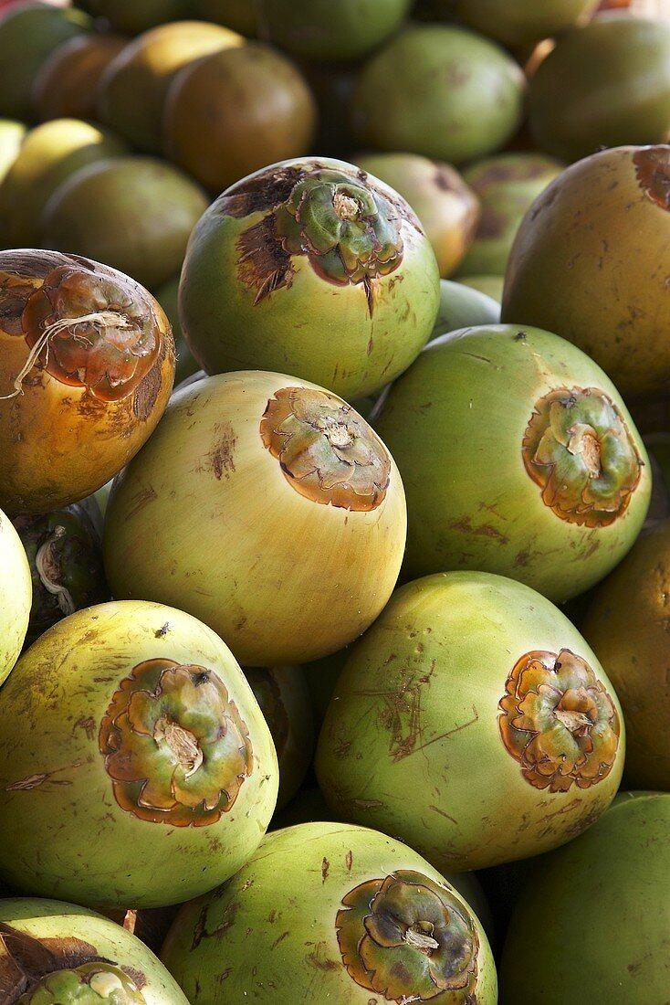Many unripe coconuts