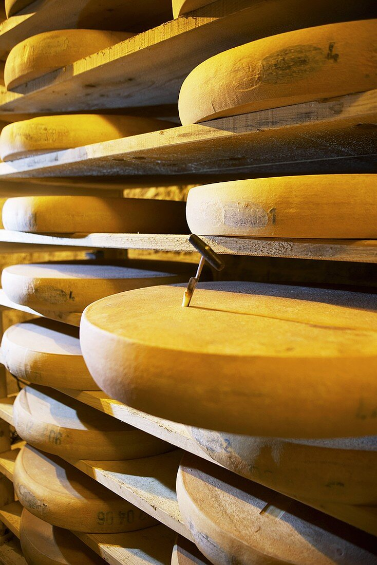 Comté cheeses with cheese tester in Fort de Rousse cheese cellar