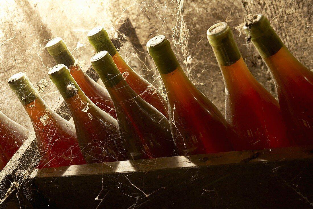 Red wine bottles in wine cellar in the Jura, France