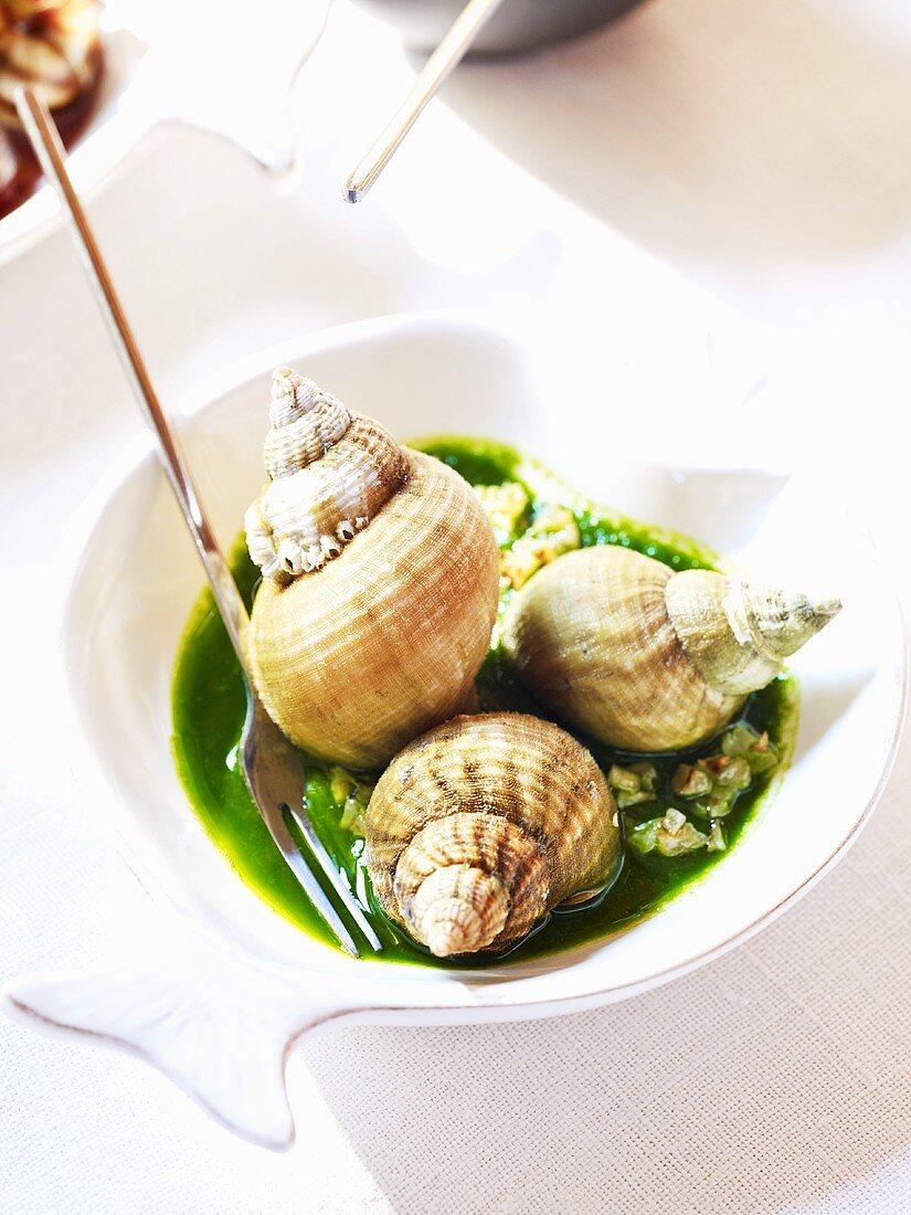 Whelks in herb sauce