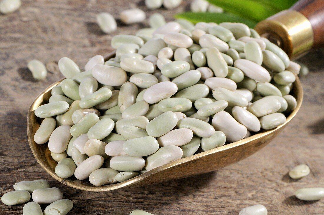 Flageolet beans in brass scoop