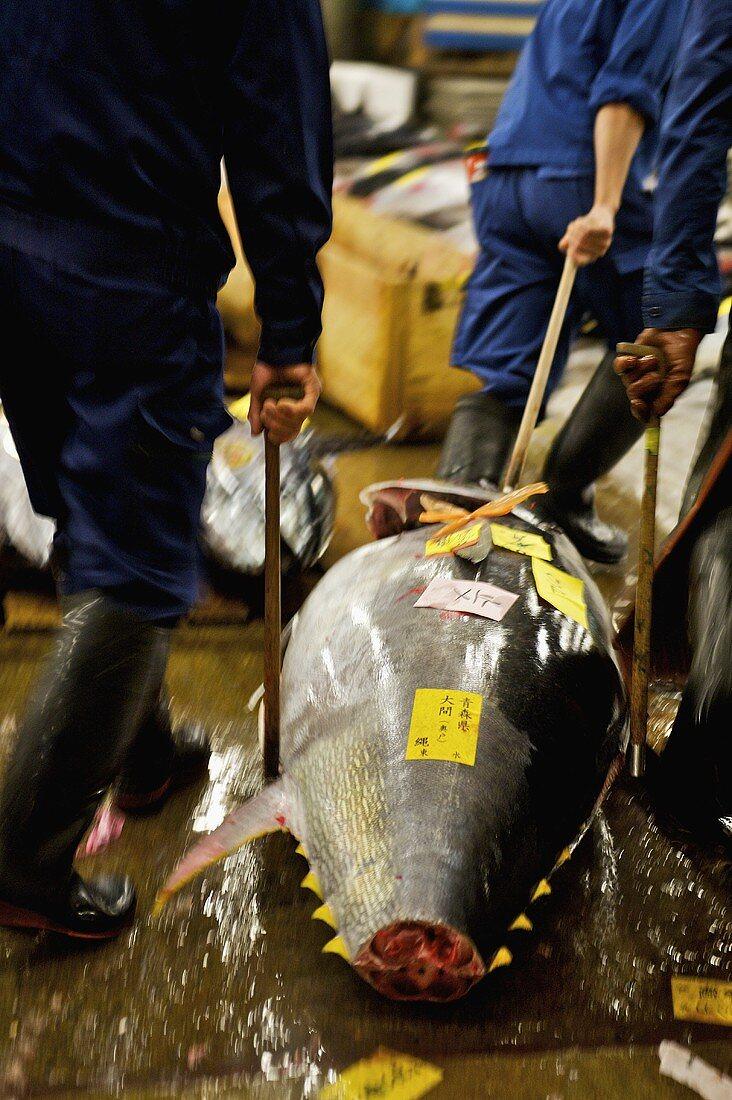 Tuna at Tsukiji Fish Market in Tokyo