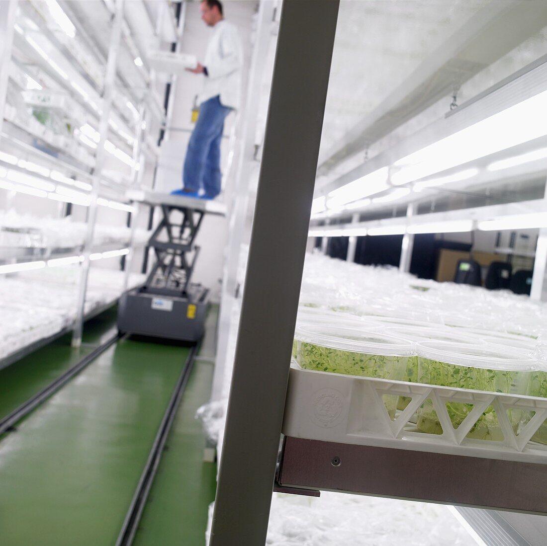 A plant laboratory