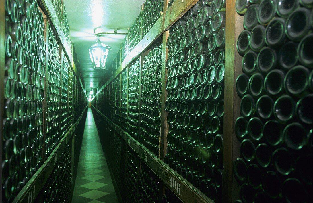 Bottle racks in wine cellar, Pancin, Romania