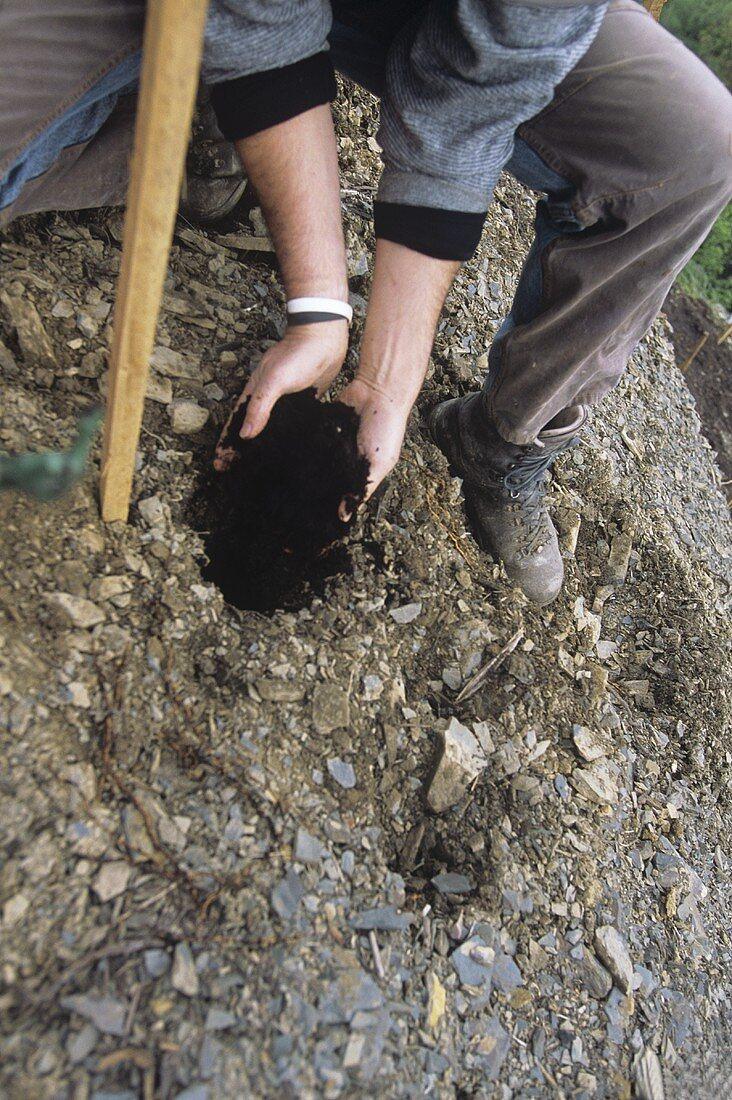 Worker planting a vine, H.J. Kreuzberg, Dernau