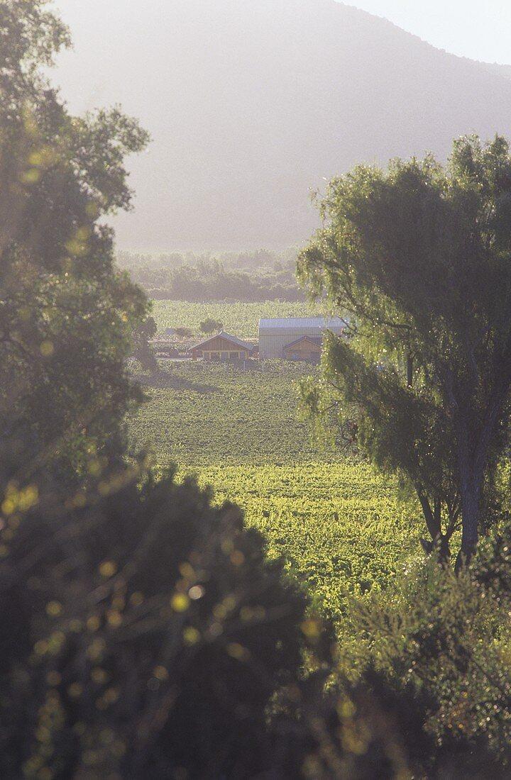 The Concha y Toro Wine Estate, Casablanca, Chile