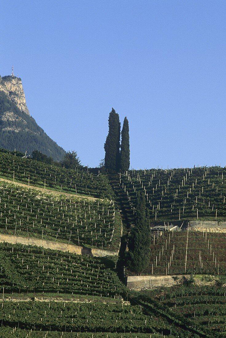 Alois Lageder Winery, Magreid, S. Tyrol