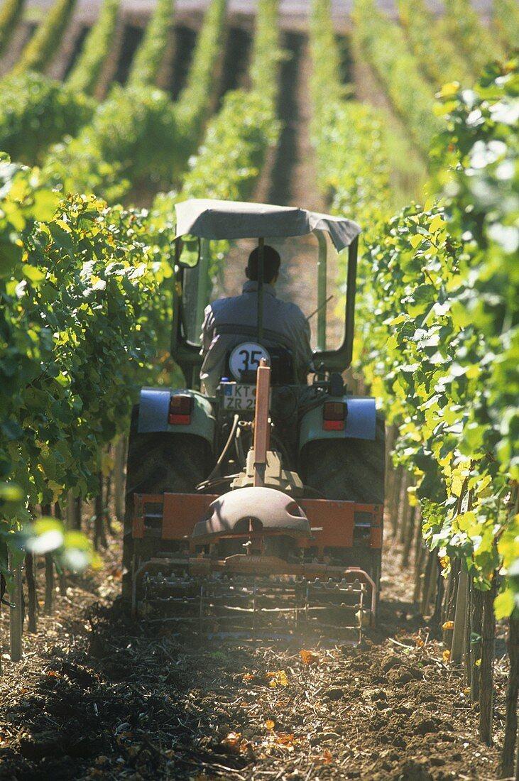 Tractor driving between rows of vines