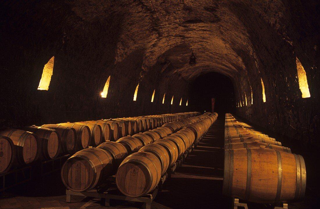 Barrique cellar, Tenuta Le Querce winery, Basilicata, Italy