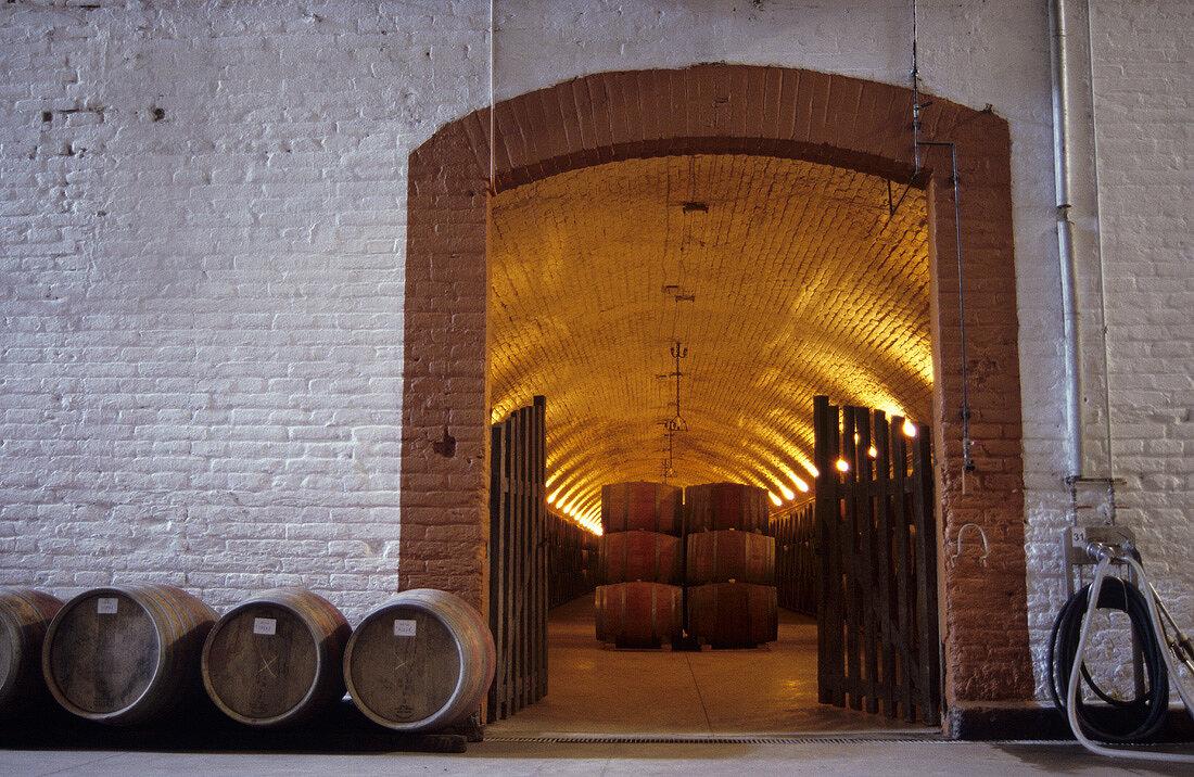 Cellar of Don Maximiano Estate of Viña Errazuriz, Chile