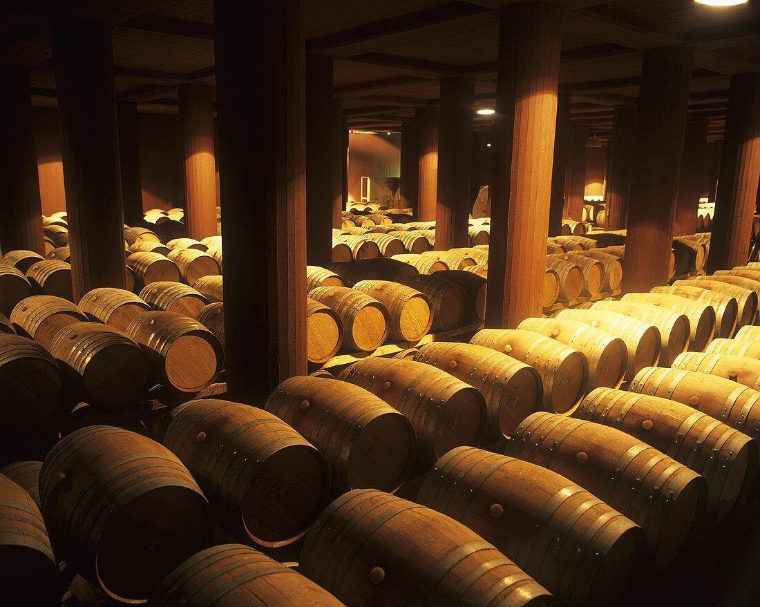 Barrel cellar of the Trapiche Estate, Mendoza, Argentina
