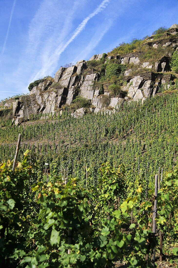 Slate formations in the vineyards near Altenahr, Ahr, Germany