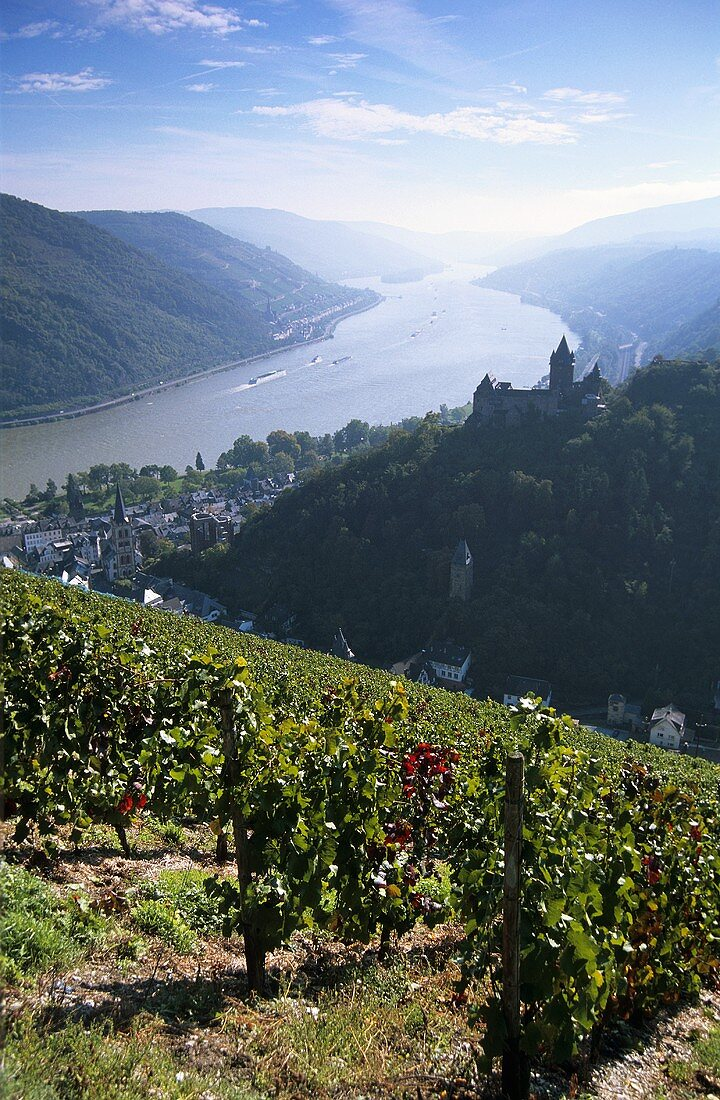 'Bacharacher Wolfshöhle' Einzellage with view of Bacharach, Germany
