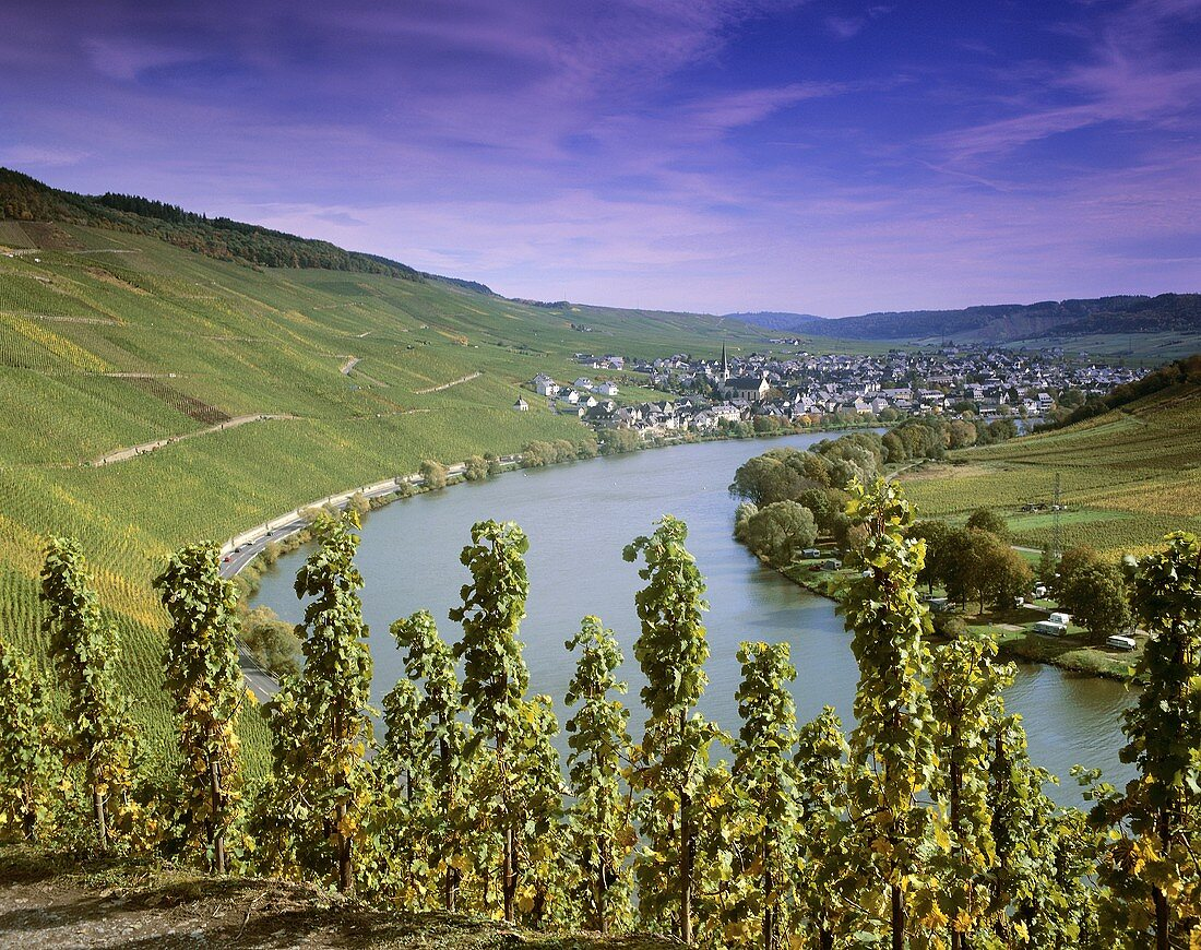Vineyards with view towards Kröv, Mosel, Germany