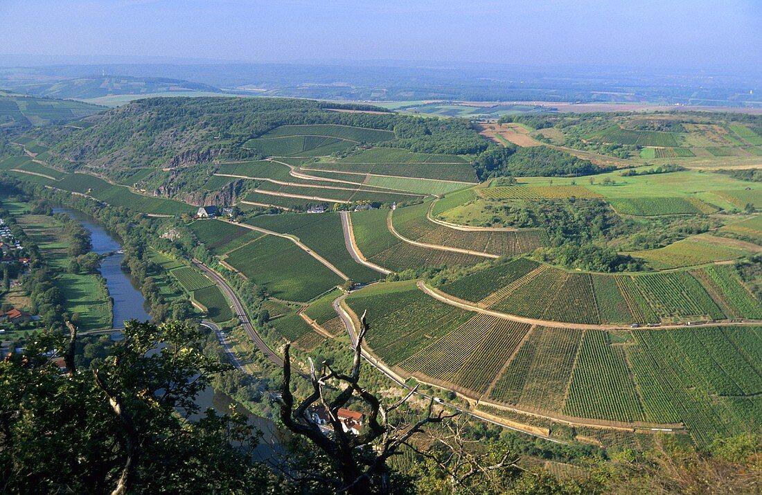 View over vineyards near Niederhausen, Nahe, Germany