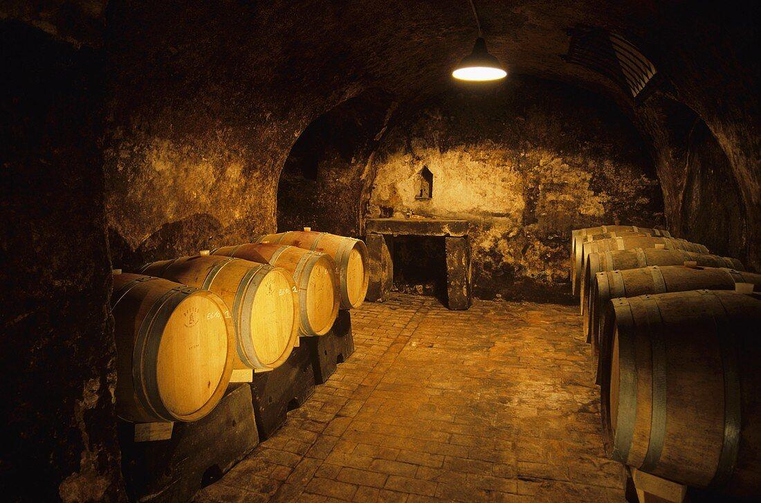 Old barrique cellar, Weingut Wittmann, Westhofen, Rheinhessen, Germany