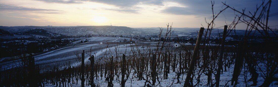 Winter in 'Fellbacher Lämmler' Einzellage, Württemberg, Germany