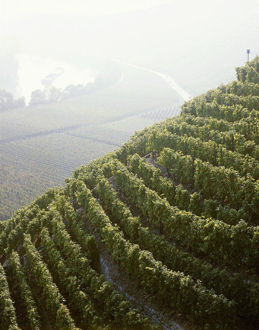'Mundelsheimer Käsberg' Einzellage (single vineyard), Württemberg, Germany