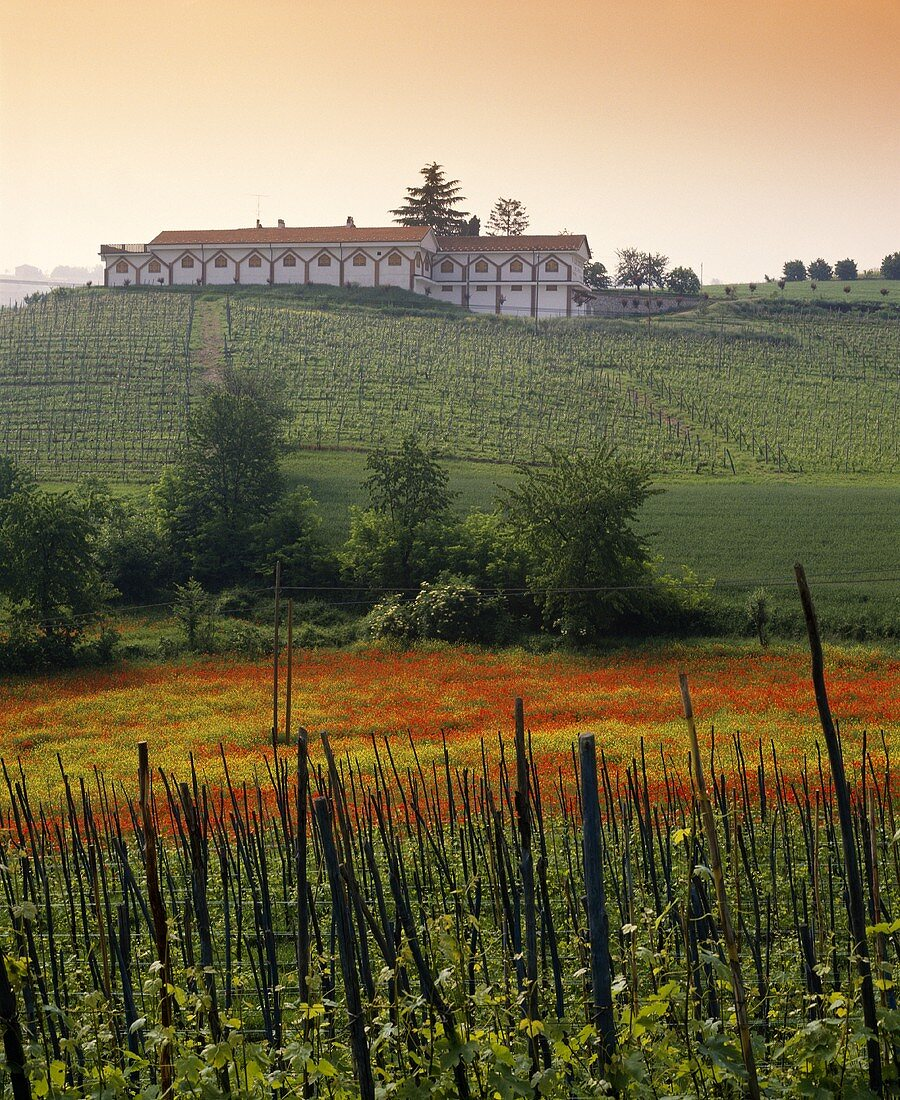 Cantina Aldo Conterno, Monforte d'Alba, Piemont, Italien