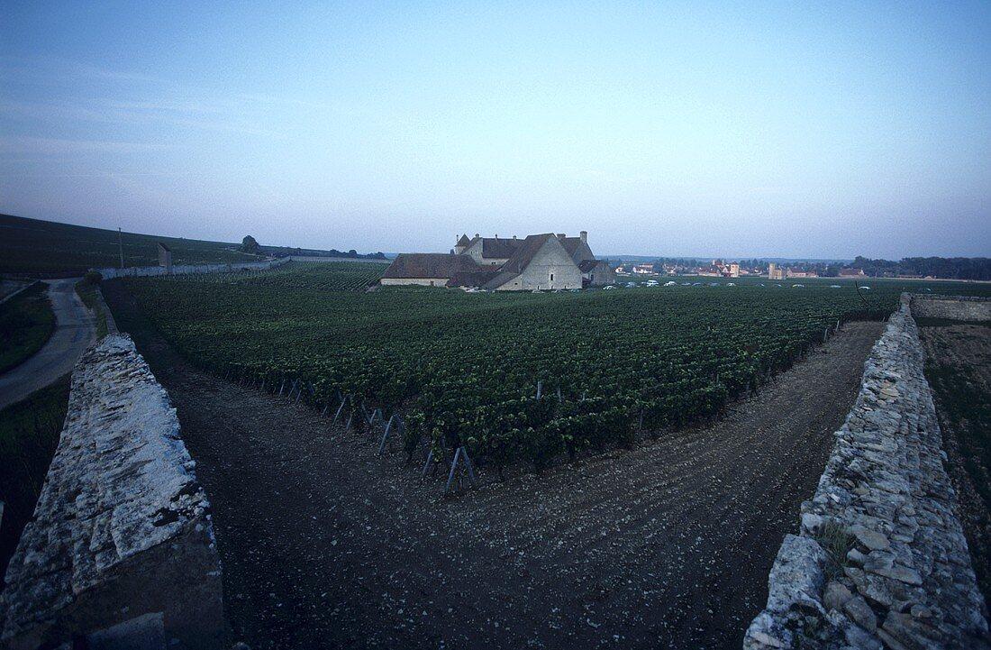 Clos de Vougeot with Château, Côte d'Or, Burgundy, France