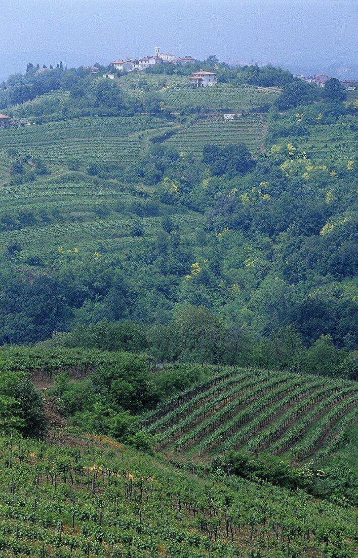 View towards Kojsko, Collio region, Friuli, N. Italy