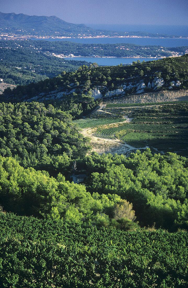 Bandol, Provence, Frankreich
