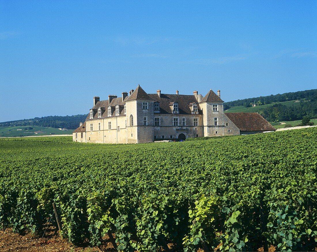 Clos de Vougeot, Vougeot, Côte d'Or, Burgundy, France