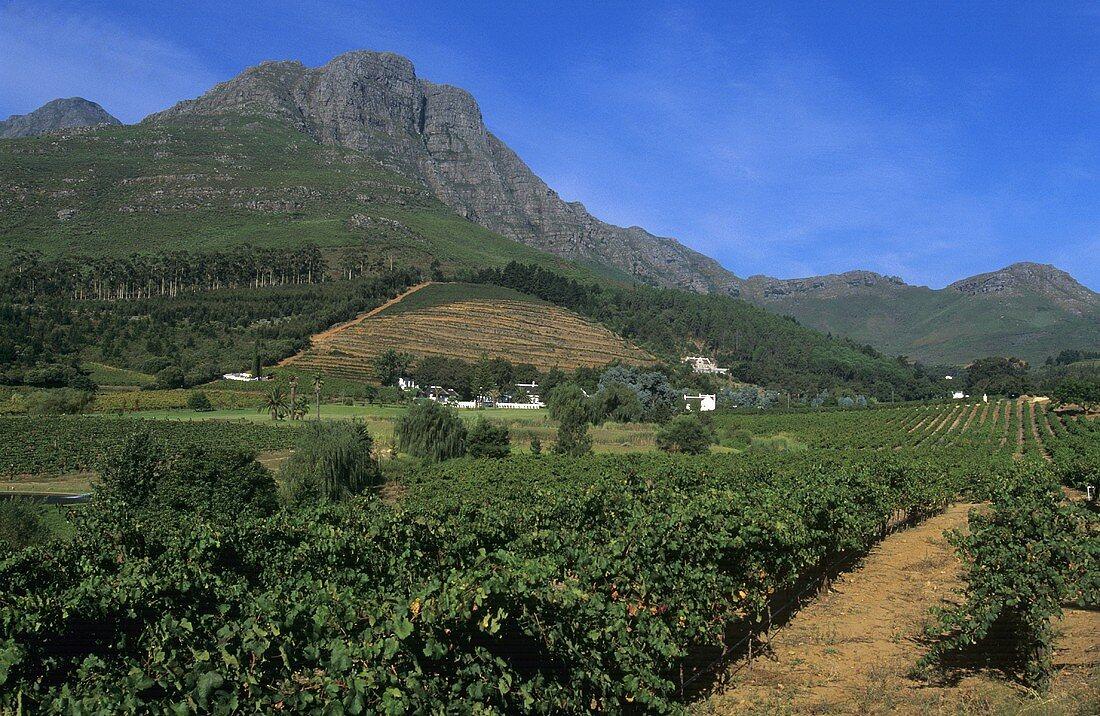 The Dornier Wines Estate, Stellenbosch, S. Africa
