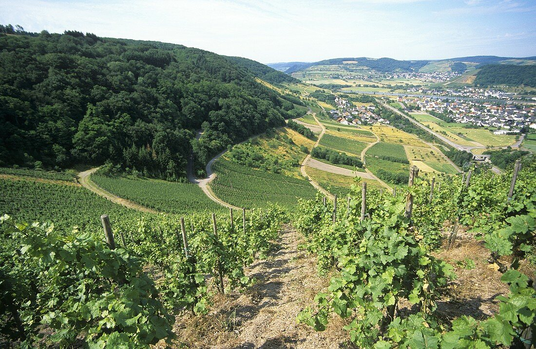 View over Schodener Herrenberg,  Weinhof Herrenberg,  Saar-Mosel-Ruwer