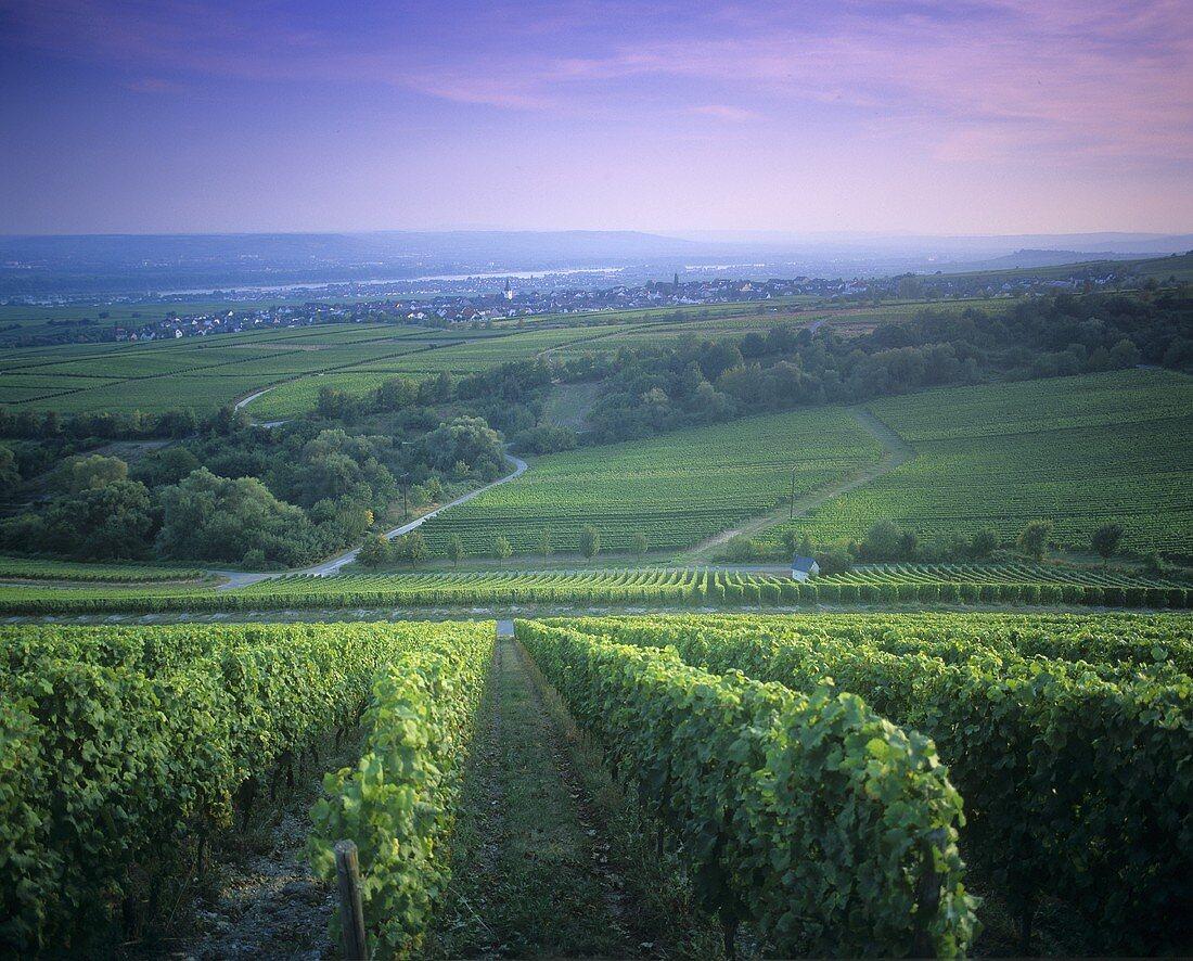 View over Rheingau wine-growing area towards Hallgarten, Germany