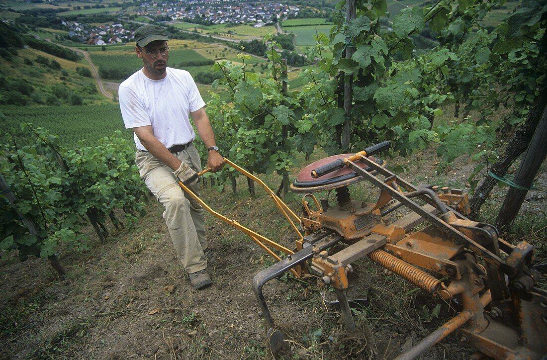 Tilling the soil, 'Schodener Herrenberg' site, Schoden, Mosel-Saar-Ruwer