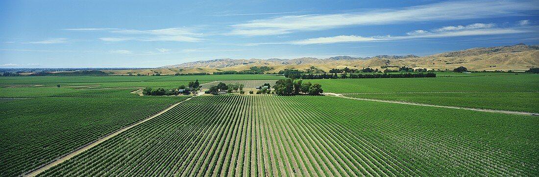 Montana's Brancott Estate, Blenheim, Marlborough, N. Zealand