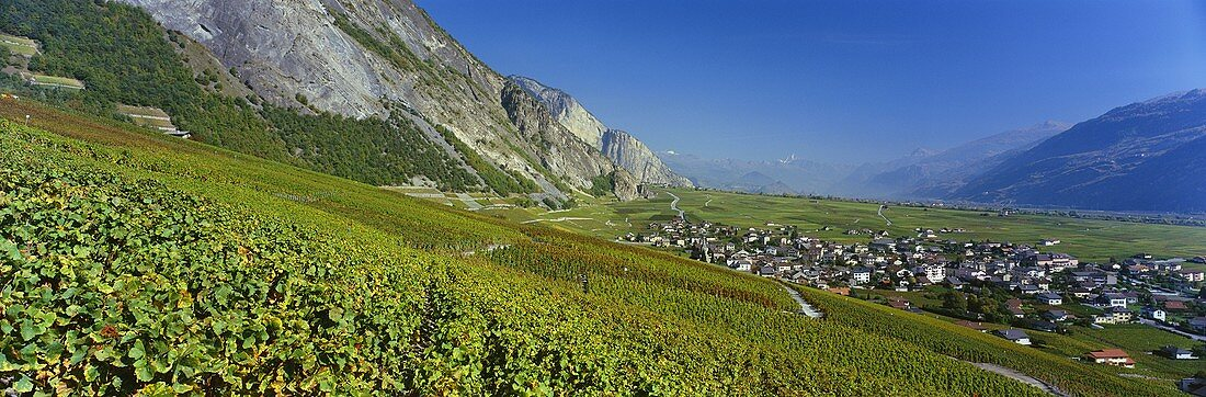 Wine-growing near Chamoson, Valais, Switzerland
