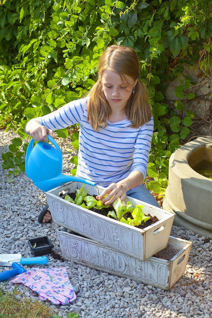 A girl watering lettuce seedlings in a flower box