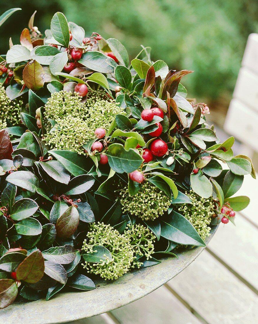 Checkerberry (Gaultheria procumbens) in planter