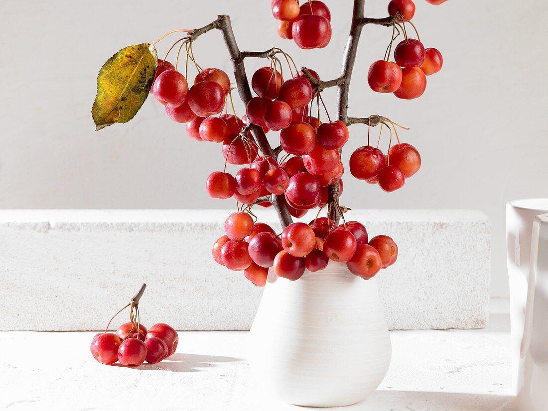 Crab apples in vase