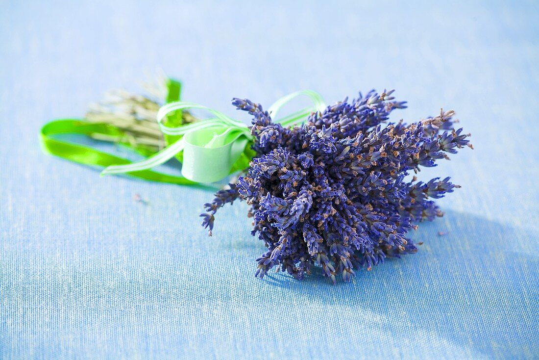 Bunch of lavender with green bow