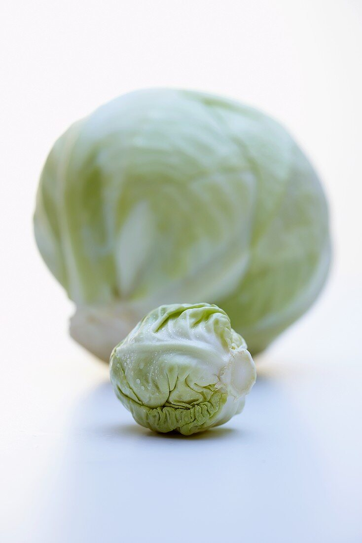 Baby white cabbage in front of full-sized cabbage
