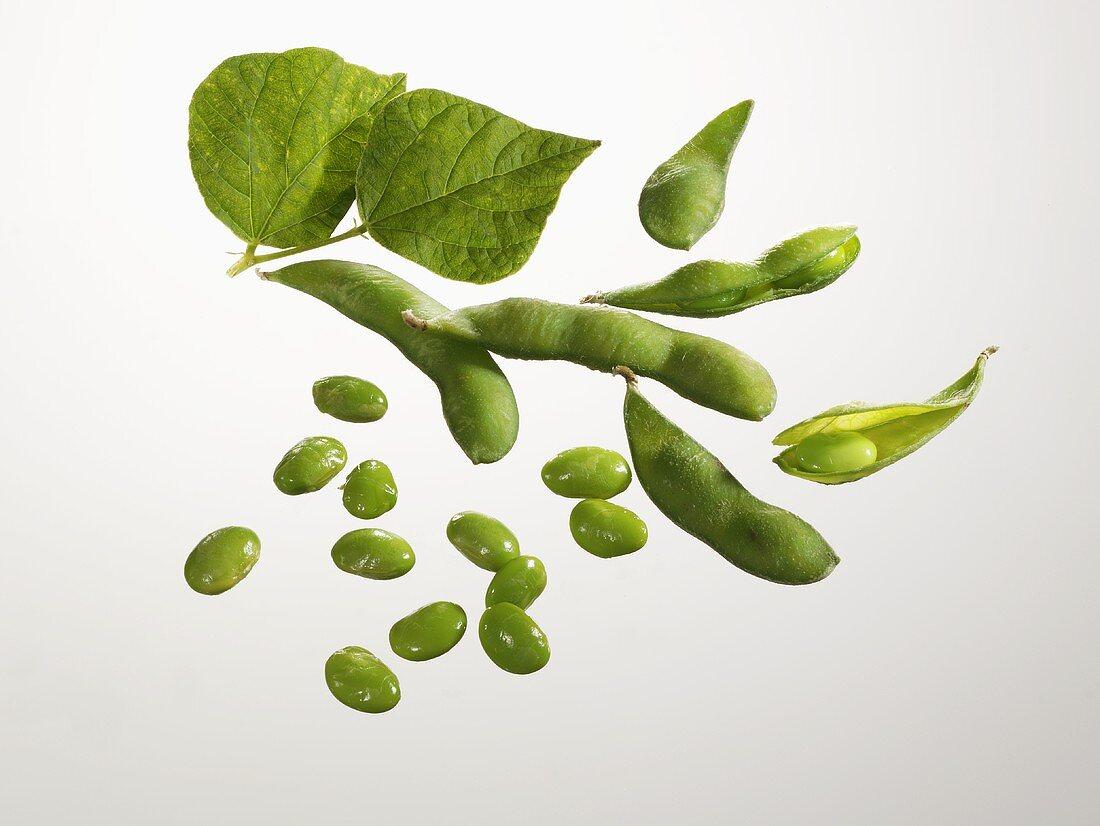 Fresh soya beans and soya bean pods