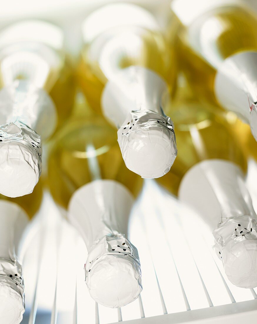 Champagne bottles in a pile in fridge