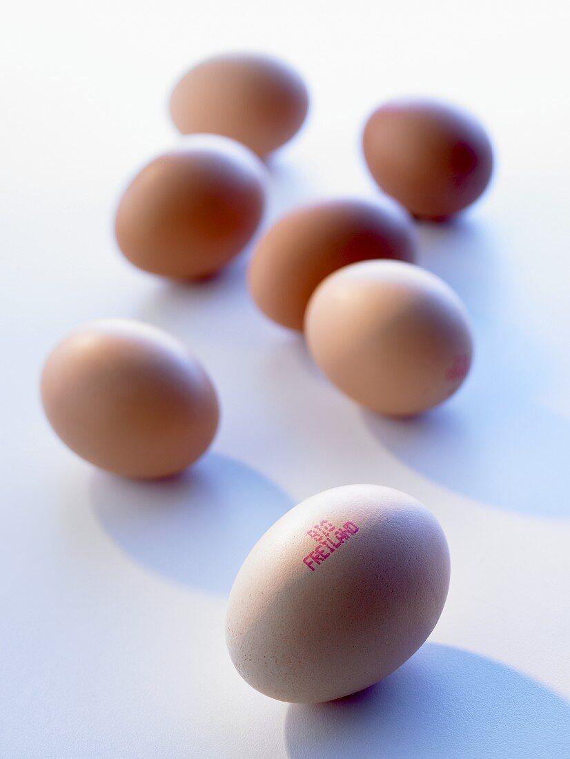Organic free-range eggs with stamp showing origin