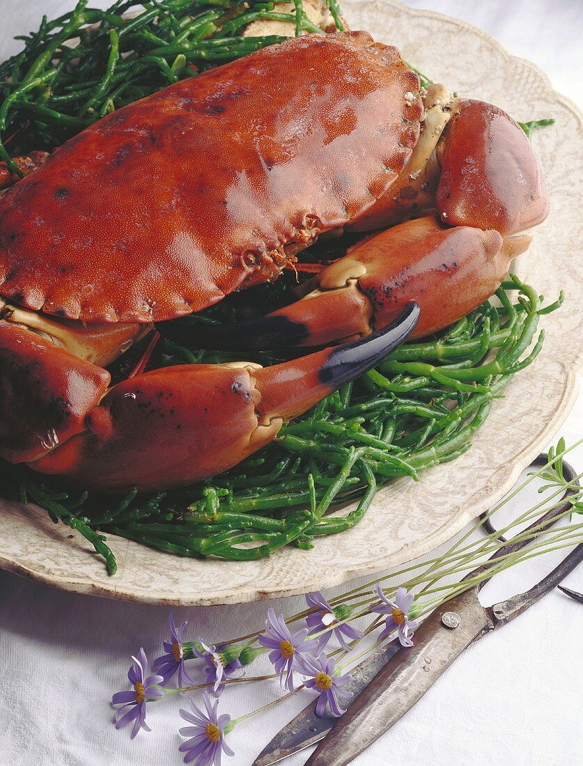 Stone crab on samphire