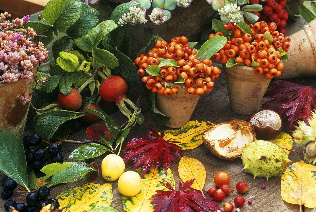Autumn still life with berries, chestnuts and leaves
