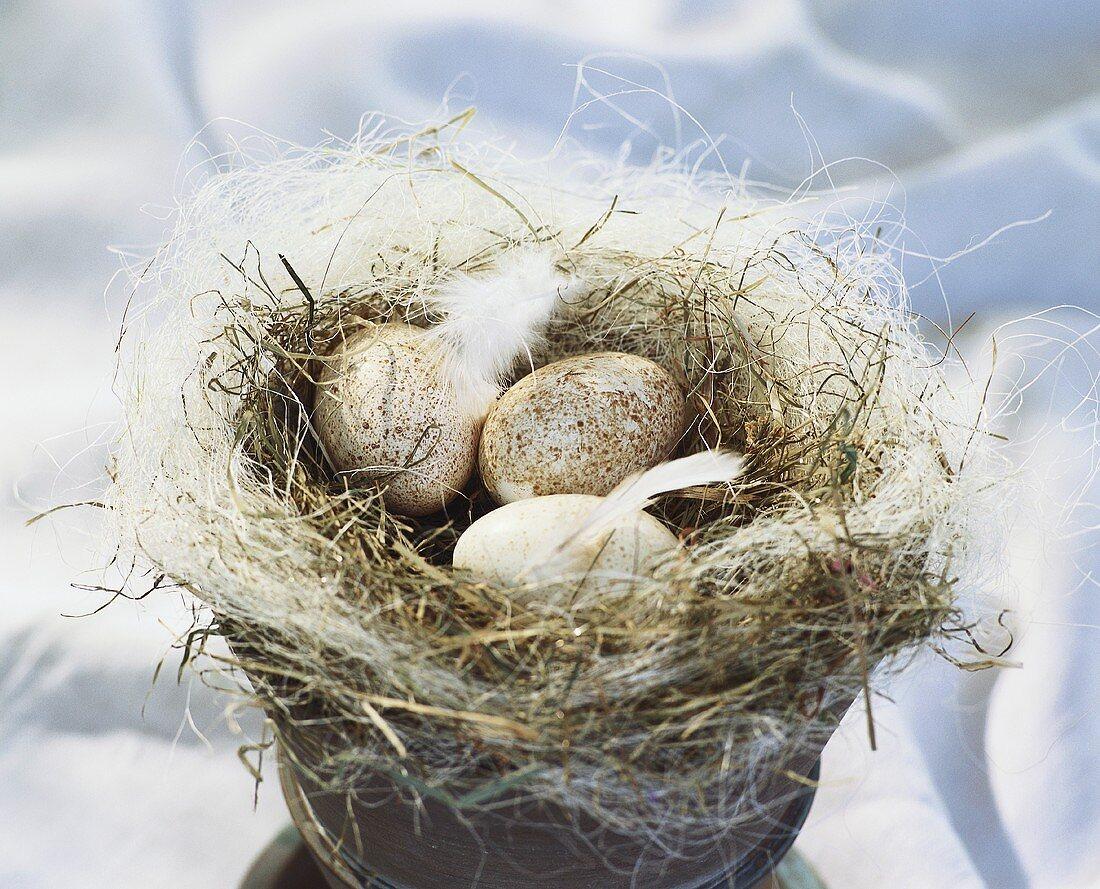 Duck eggs in Easter nest