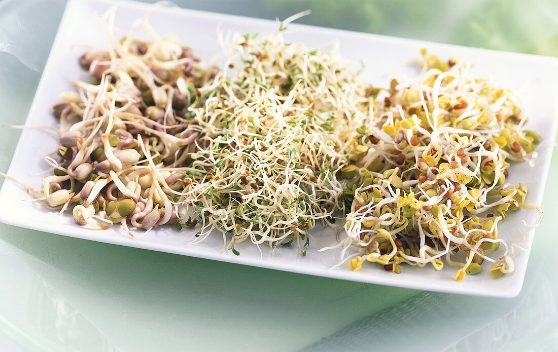 Three different kinds of sprouting seeds in a bowl