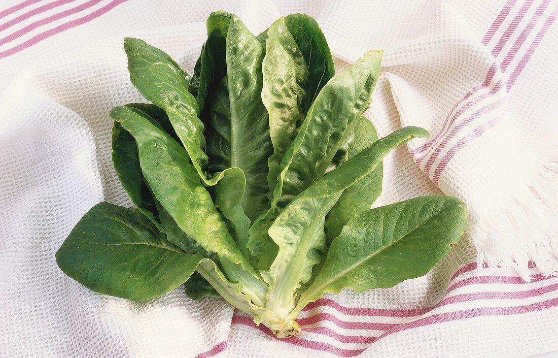 Lettuce on striped tea towel