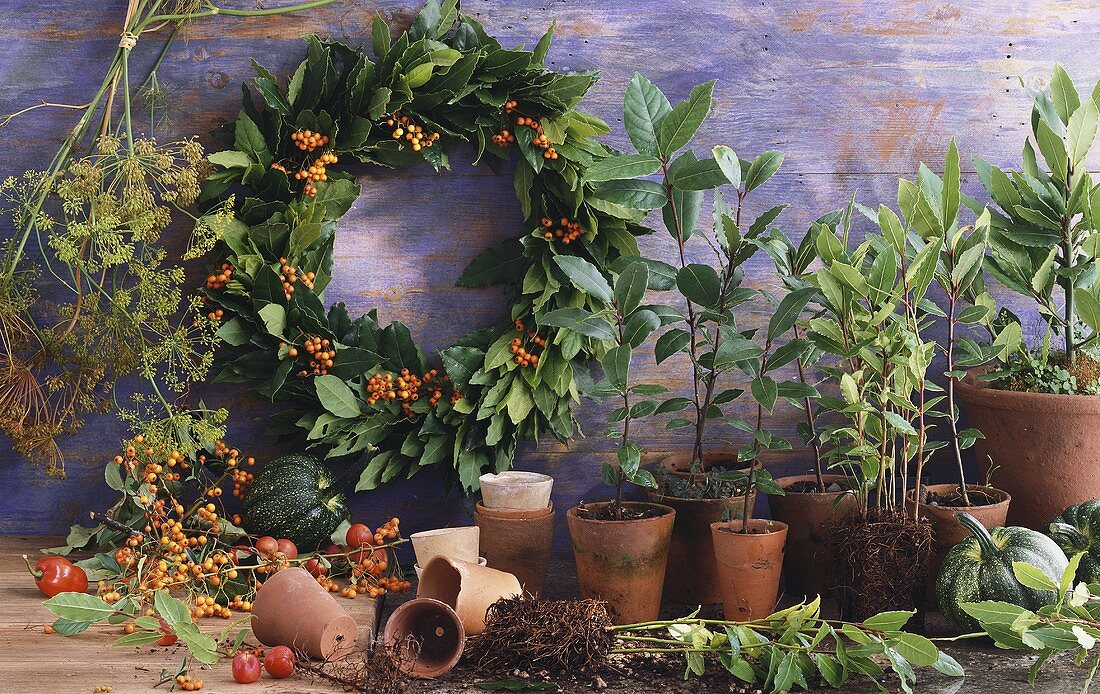 Still life with bay leaves and plants