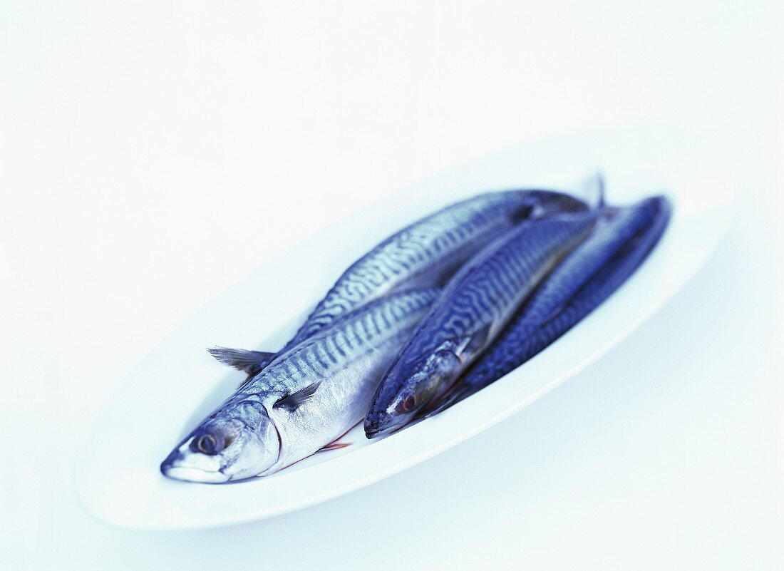 Four mackerel on a platter